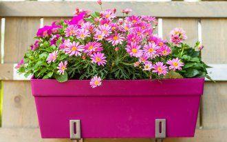 https://ru.depositphotos.com / brebca: Цветы в контейнете