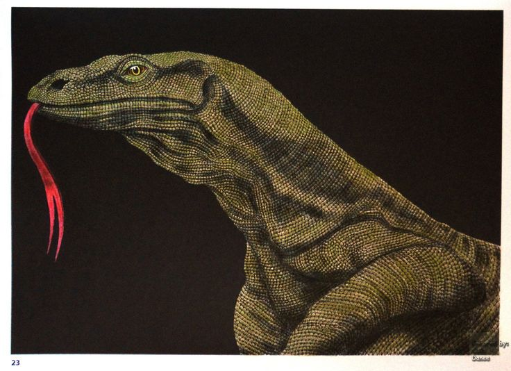 Tim Jeffs -  Intricate Ink Animals in Details volume 1 Komodo Dragon   Coloured with Aihao pencils