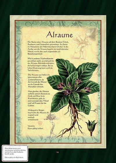 Alraune - sie hat einen rausch ähnlichen Effekt! Also mit Vorsicht einsetzen. Die Alraune wird häufig in Liebesdingen, aber auch zur Heilung und zum Schutz eingesetzt.  Alraunen können im Garten gepflanzt werden. Sie möchte gut unterhalten werden. Desto besser gedeiht sie. Tiere und Kinder von der Pflanze fern halten!!!