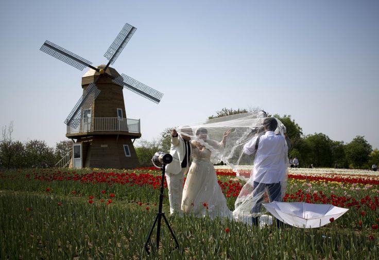 Sepasang pengantin baru berpose untuk foto pernikahan di taman bunga tulip dengan replika kincir angin di Beijing, China.