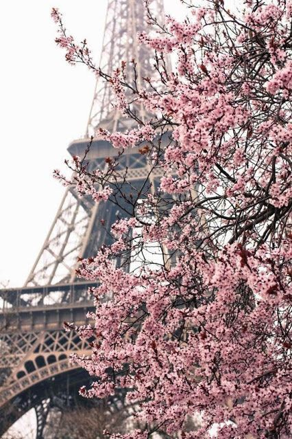 Pink tree with the Eiffel tower. Looks romantic.