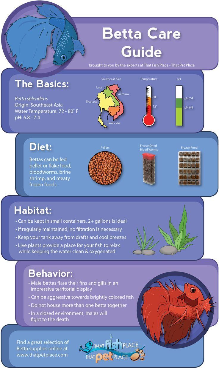 Freshwater fish diet - Betta Care Infographic