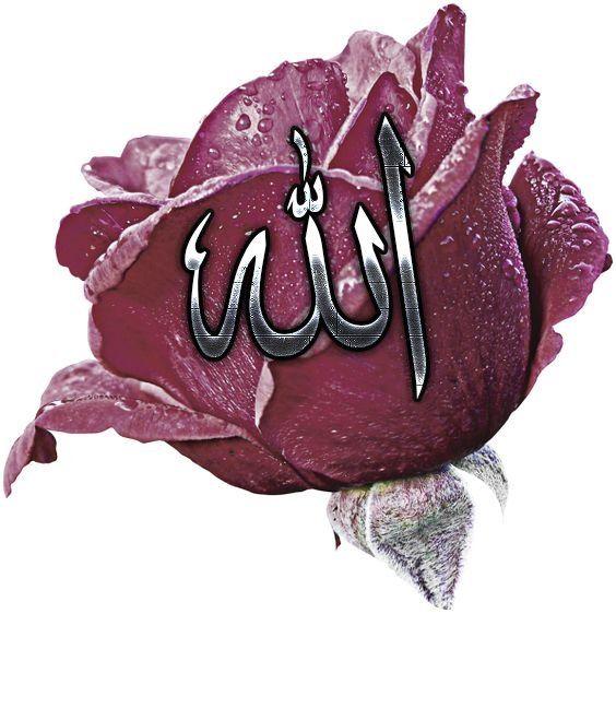 Смотреть красивые картинки с розами с именем аллаха анимация