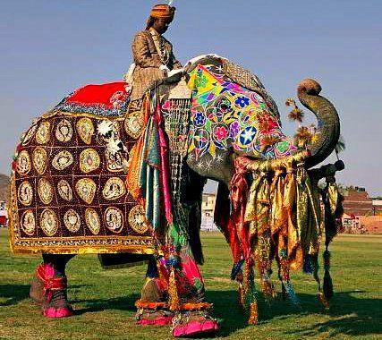 HOLI.festival of colors INDIA