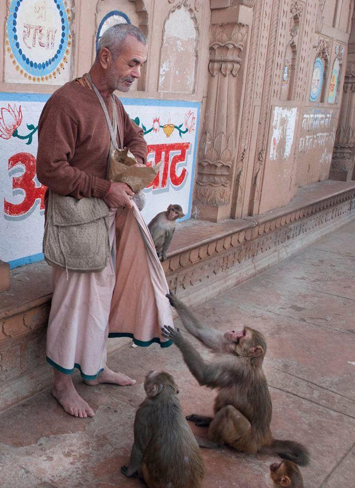 Monkeys at Keshi Ghat                                                                                                                                                                                 More