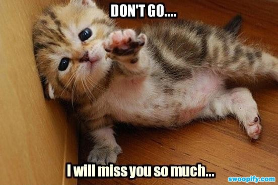 I Miss You So Much #humor #lol #funny | things to make u ...  I Miss You So M...