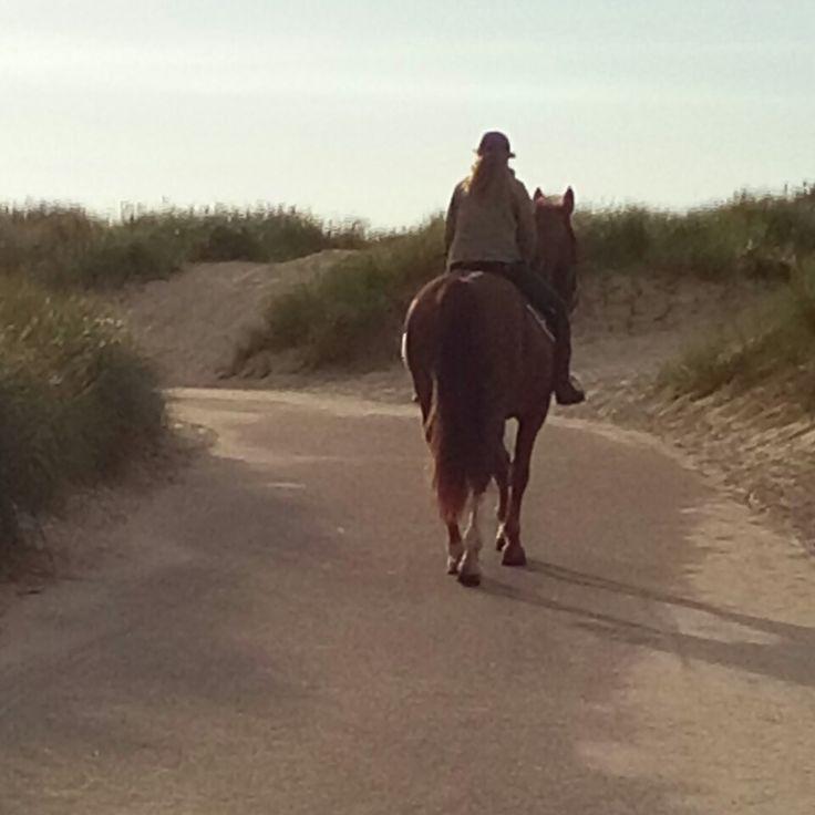 A horse to the beach