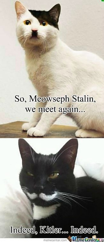 Hitler-Stalin: Meowseph Stalin, Funny Pictures, Funny Cat, Cat Humor, Too Funny, Funny Stuff, So Funny, Black Cat, Animal