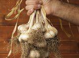 Farmer's hand holding organic garlic