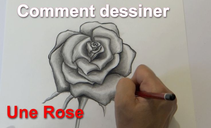 Dessin d'une rose , Drawing a rose, Speed drawing