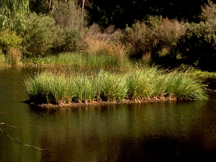 Floating Wetlands, Floating Islands, Aqua Biofilter, Aquaponics, Floating Reedbeds, Aquaponics Kitchen Garden, Biofilm, Floating Biofilter, Algal bloom, Aquaculture, Waste water treatment |