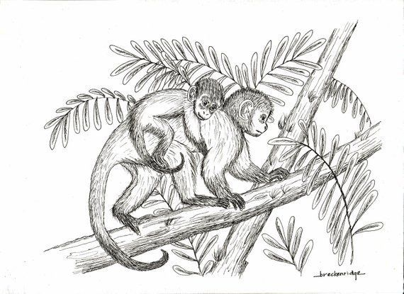 Pin By Katrina Feher On Tattoos That I Want Monkey Drawing Face Drawing Cartoon Pencil Sketches