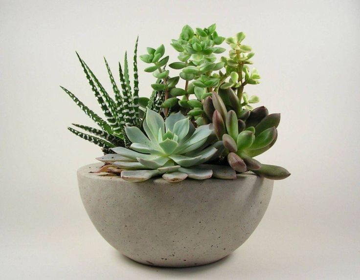 (the plant arrangement caught my eye)Concrete  Bowl - Light Grey. $32.00, via Etsy.
