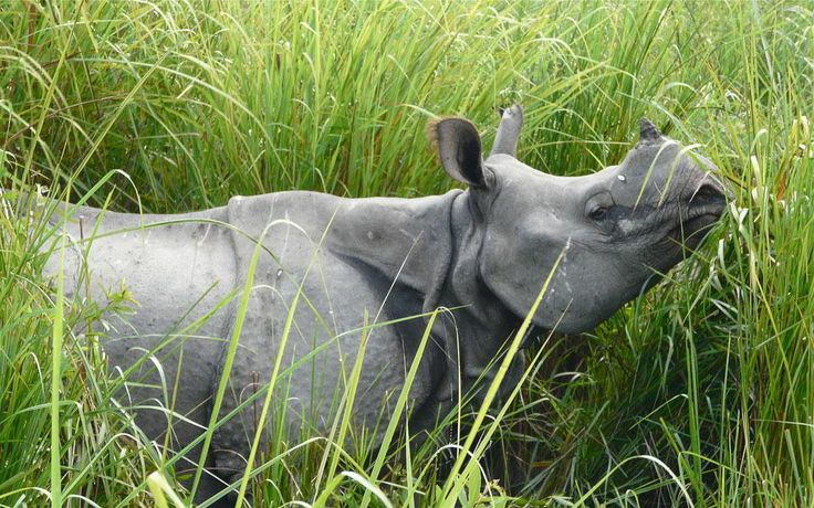 Kaziranga National Park has been recognized as a World Heritage Site and national park of India, Geographical the park is located in the Golaghat and Nagaon districts of Assam is the state of India