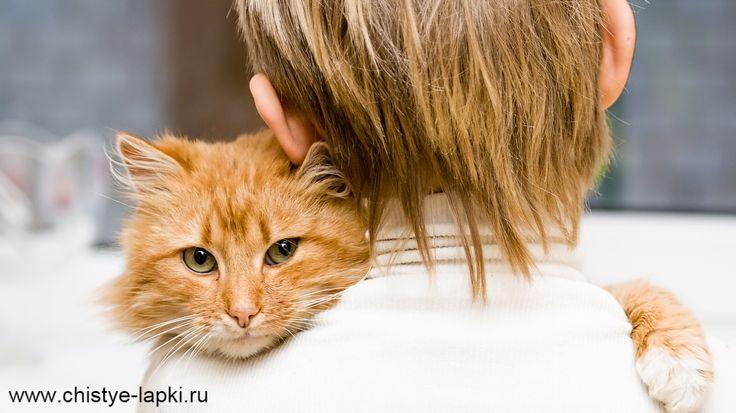 Кошки разбираются в людях куда лучше, чем другие люди. Макс Фрай