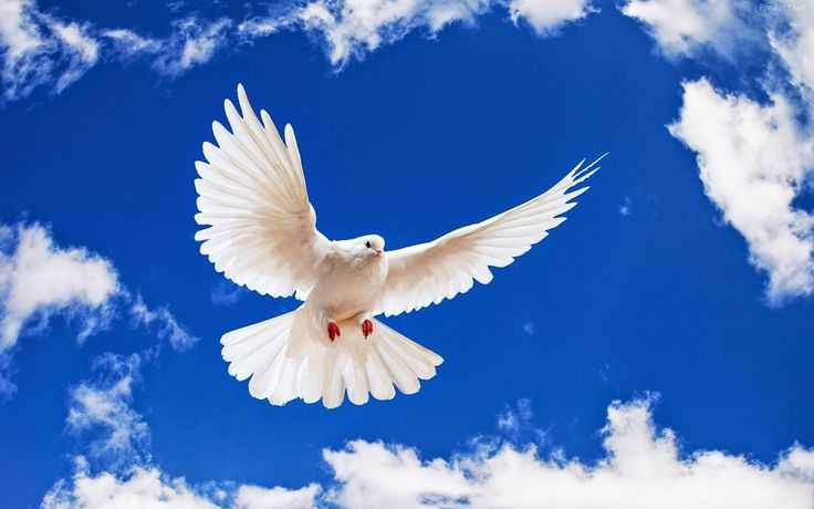 Dios Trino o Politeísmo, 7 cosas que habla la Biblia que Deberías Saber | BlogueandoParaTodos.com