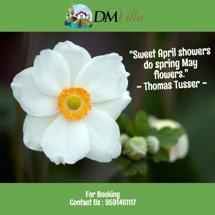Quote of the day sweet april showers do spring may flowers quote of the day sweet april showers do spring may flowers thomas tusser dm villa quotes pinterest april showers and showers mightylinksfo