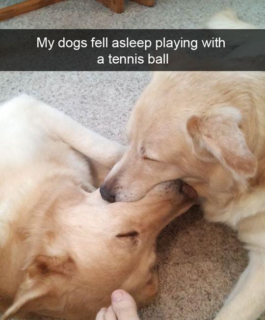 Funny Dog Snapchats (see 12 more)