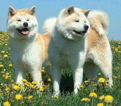 Beautiful Breed of Dog...