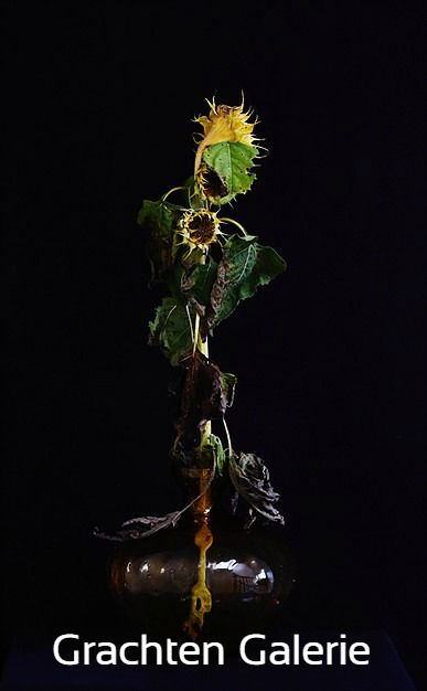 Zonnebloem | Sun flower | Fotografie | Photography | Heidi Wallheimer | Bloemen | Flowers | Zwart | Black | Geel | Yellow | Groen | Green | Grachten Galerie