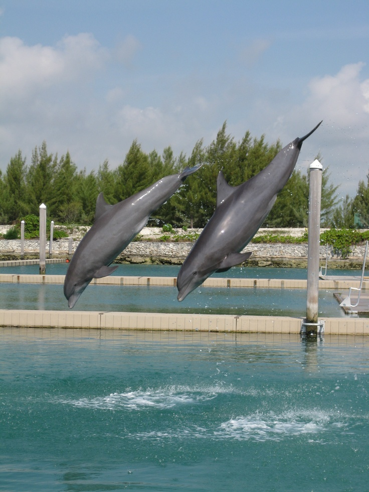 If you are ever in Freeport, Bahamas take the opportunity to swim with the Dolphins. You can actually get in the water with them and learn the signals trainers do- so fun!  worth the money