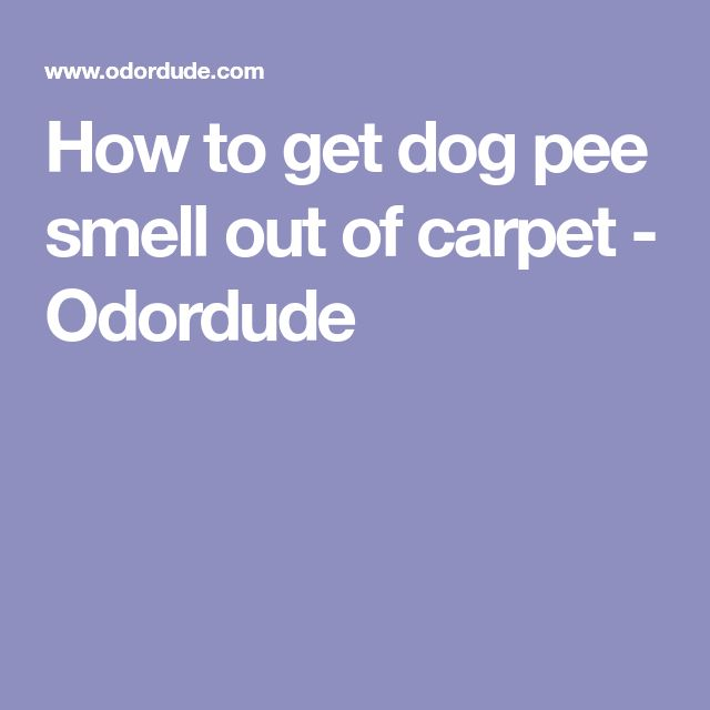 Best 25+ Dog pee smell ideas on Pinterest | Removing dog ...
