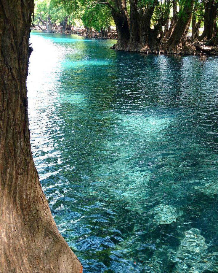 Lago del Parque Nacional de Camecuaro - Otra toma de Lago del Parque Nacional de Camecuaro, con sus enormes arboles sabinos. #camecuaro #michoacan #mexico