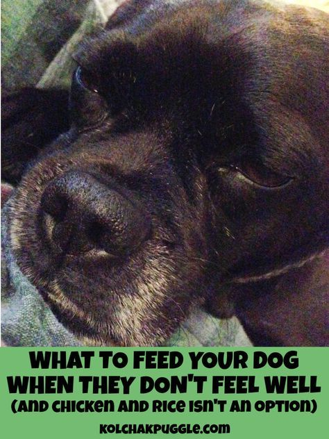 WHAT TO FEED A SICK DOG (WHEN CHICKEN AND RICE ISN'T AN OPTION)
