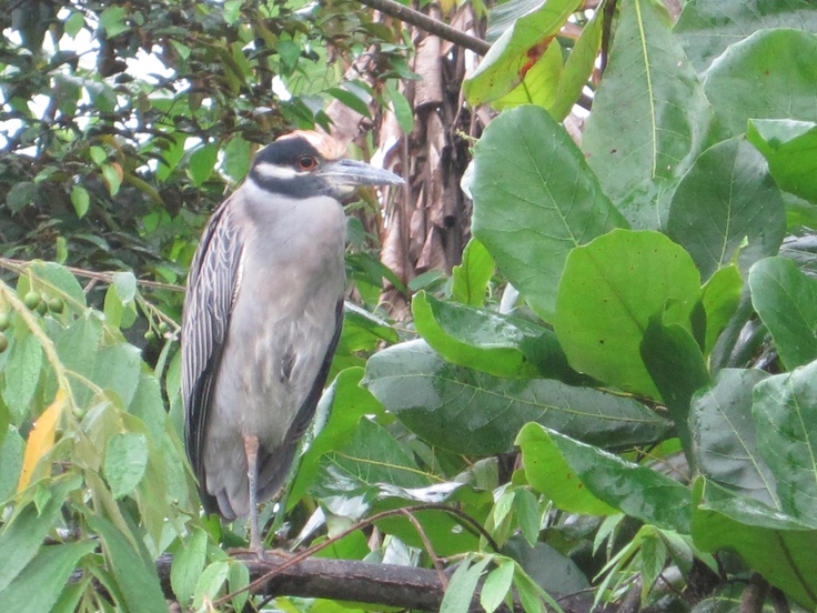 Rain Forest, Panama, December, 2011