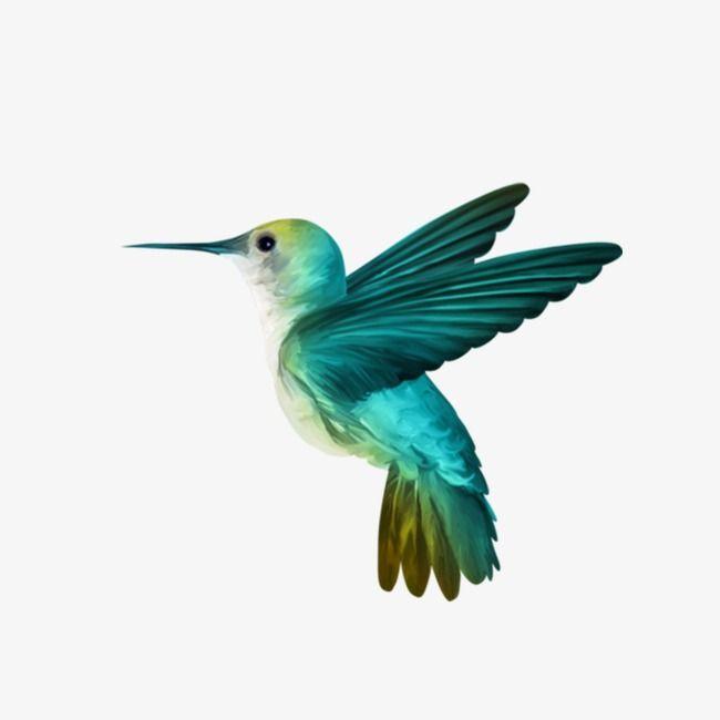 hummingbird in 2019 bird drawings
