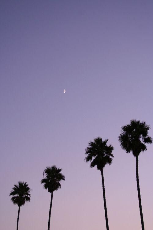 California dreaming #GUESSGirlBelle: Moon, Purple, Color, Palms Trees, California Dreams, Roads Trips, Travel, Summer Night, Night Sky