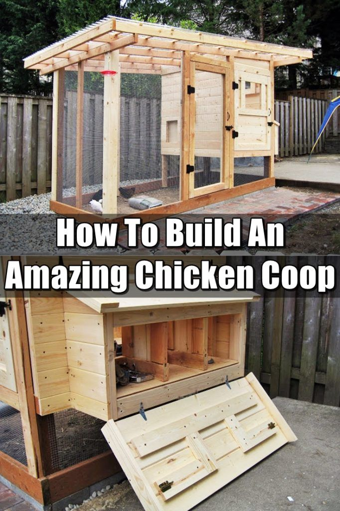 How To Build An Amazing Chicken Coop - Having chickens is rewarding and just pure awesomeness rolled into one. Make sure you have a great coop. Don't spend hundreds of dollars on a pre-made one. Build one!