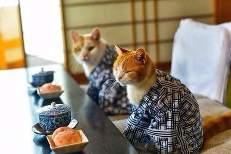 Жить надо по-японски: не торописса, не волновасса и улыбасса)) Доброе утро!!! Пусть сегодня все будет зашибисса!!!  #юмор #хорошеенастроение #мотивация #красота #красотатут #jenskiimirok #советдня