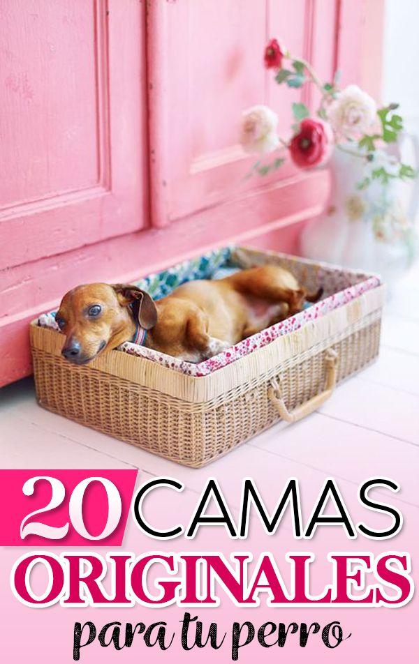 Elige una camita que se adapte al espacio que tienes destinado para tu mascota en el hogar y haz que se sienta toda la comodidad y el amor del mundo. Akita, Dog Language, Barbie, Dog Care Tips, Plastic Laundry Basket, Pet Shop, Dog Bed, Dog Life, Puppy Love