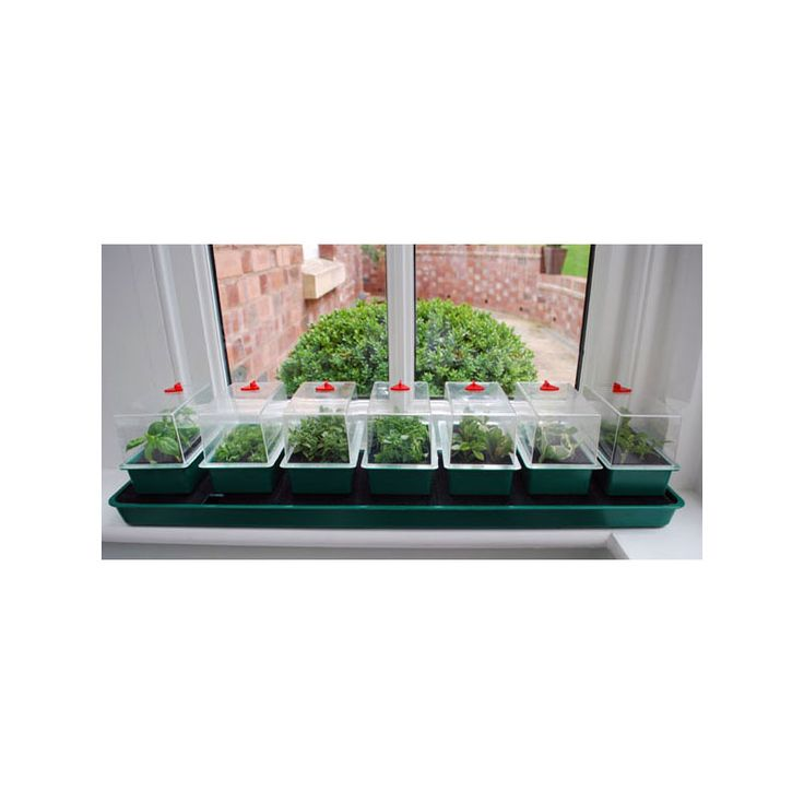 Super 7 Self Watering Propagator Seed Starting Kits Self Watering Seed Starting Watering