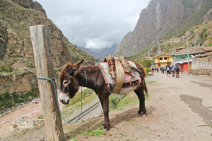 On the heels of history: Hiking the Inca Trail part 1