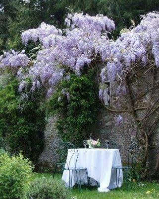 Under the wisteria, Provence / Tomar um chá com seu amor e esperar a noite que já vem chegando . Existe coisa melhor para relaxar ?