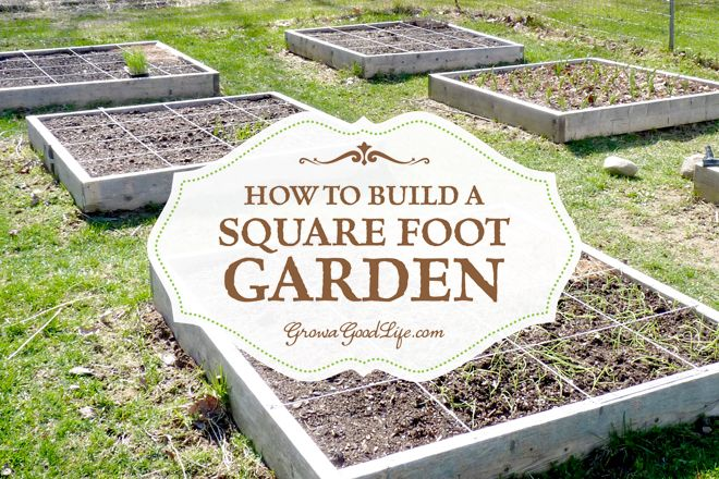 how-to-build-a-square-foot-garden-photo