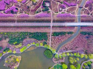 Luoyang, ChinaFlowers bloom at the Sui and Tang Dynasties Relics Botanic Garden