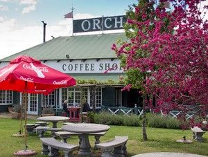The Orchard - Grabouw