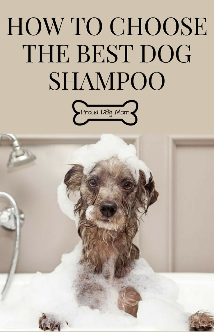 Ask The Experts: How To Choose The Best Dog Shampoo | Dog Care Tips |
