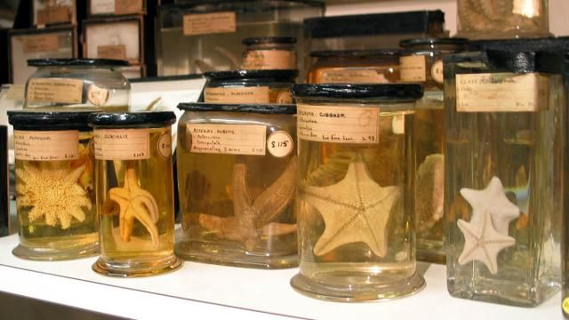 The Grant Museum is a natural history collection covering the entire animal kingdom, including many rare and extinct specimens. Based in Bloomsbury, embrace your curious side at this museum for free!