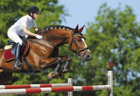 Predisposed to injury: Different sports carry different risks for horses