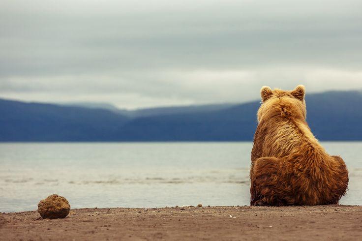 A bear at Kurile Lake