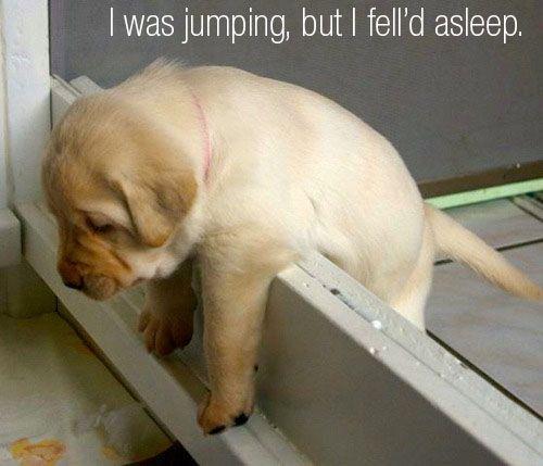 I was jumping, but I fell asleep