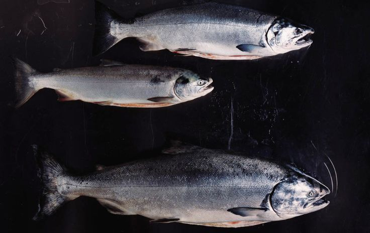 How to choose healthier seafood