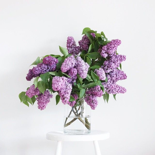 lilacs, I love these wish the smell wasn't so over powering when you bring them in the house.