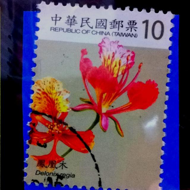 From Taiwan, 鳳凰木