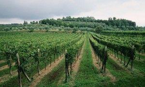 Colline della Valtenesi - Origine Foto: www.gardalake.com