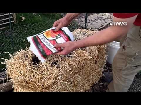 Straw Bale Gardening Start to Finish - Conditioning/Curing your Straw Bale - YouTube